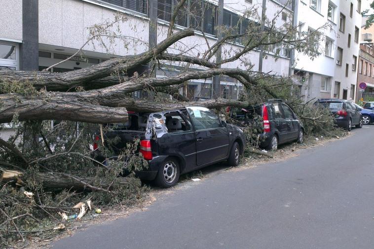 Дерево упало на машину. Куда обращаться? Кто возместит ущерб?